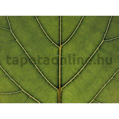 Urban Nature P031501-8