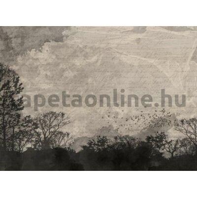 Shades P231601-8
